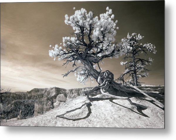 Bryce Canyon Tree Sculpture Metal Print