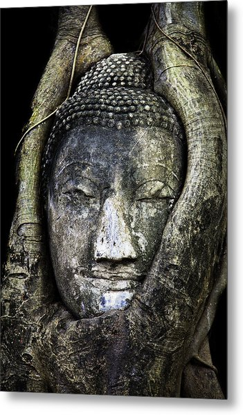 Metal Print featuring the photograph Buddha Head In Banyan Tree by Adrian Evans