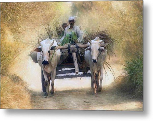 Bullock Cart Metal Print by Shreeharsha Kulkarni
