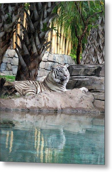 Busch Tiger Metal Print by Wayne Skeen