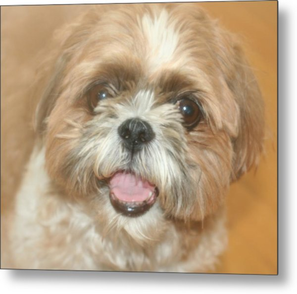 Buster Metal Print by Amy Holmes
