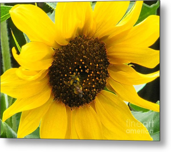 Busy Bee II Metal Print