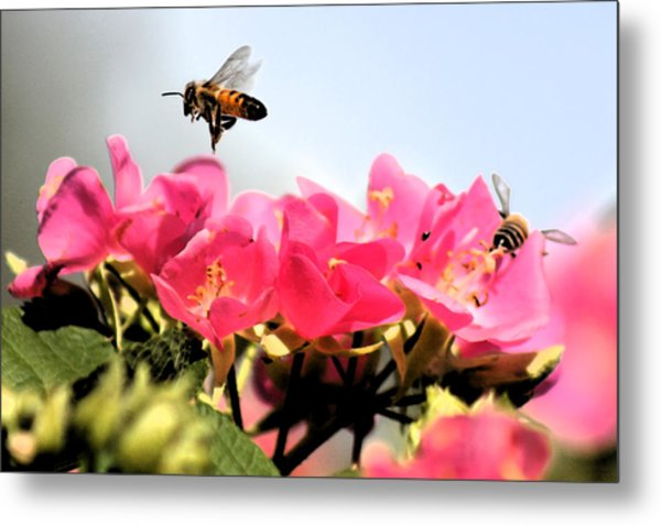 Busy Bees Metal Print by Nanette Hert