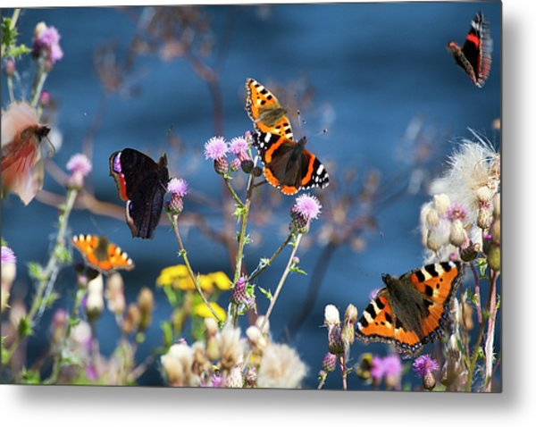 Butterflies Sitting On Flower Metal Print by www.WM ArtPhoto.se