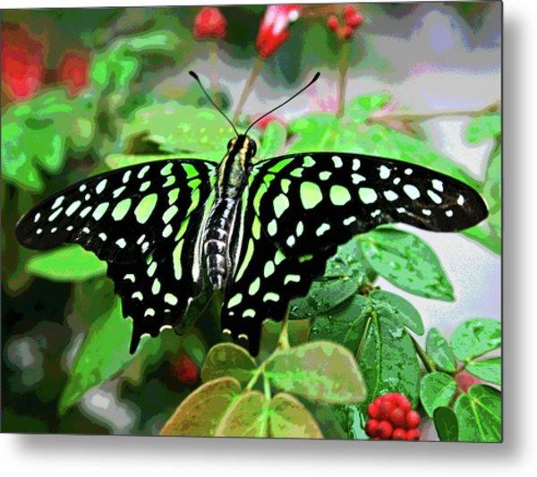 Butterfly 3 Metal Print