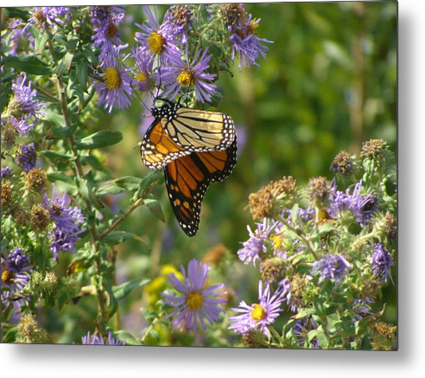 Butterfly And Blue Metal Print by Deborah Dallinga