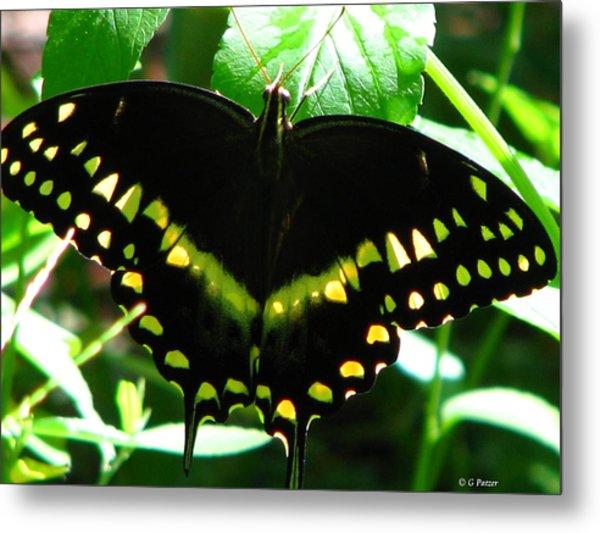 Butterfly Art 3 Metal Print by Greg Patzer