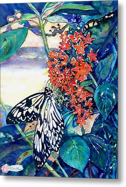 Butterfly At Mac Metal Print by Norma Boeckler