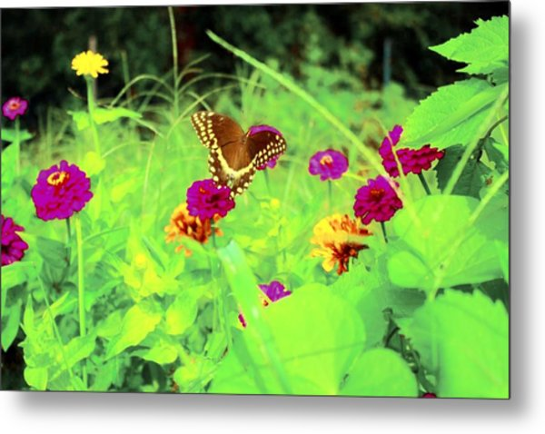Butterfly At Work Metal Print by Jill Tennison