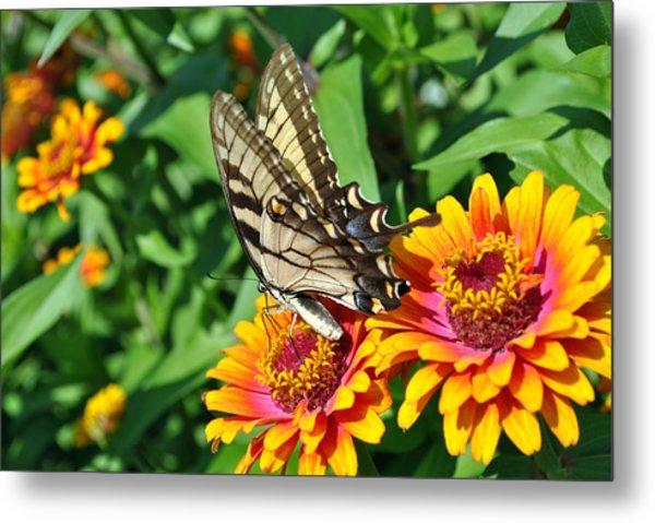 Butterfly Beauty Metal Print by Dion Baker