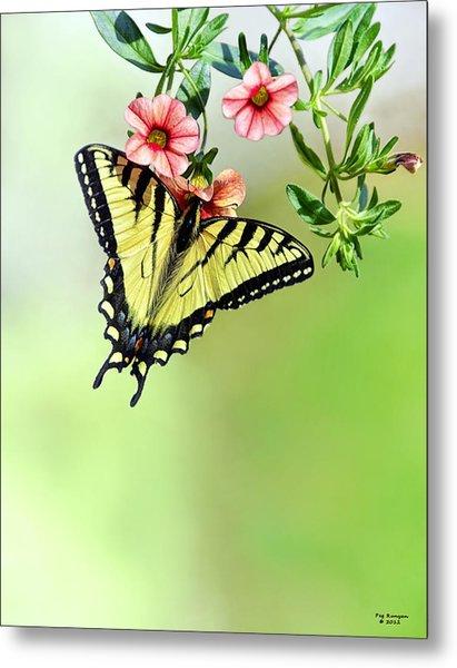 Butterfly In My Garden Metal Print