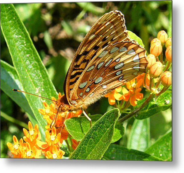 Butterfly On Flower Metal Print by Margaret G Calenda