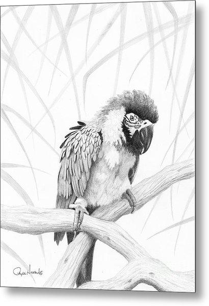 Bw Parrot Metal Print