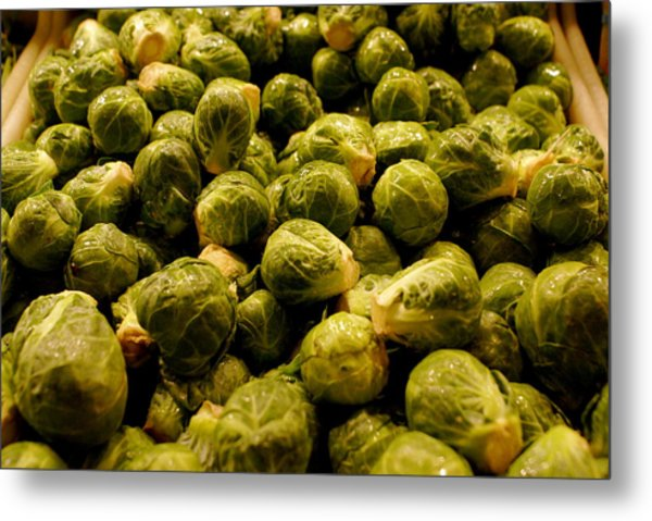 Cabbage Family Metal Print by Sonja Anderson