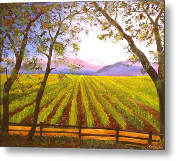 California Napa Valley Vineyard Metal Print by Connie Tom