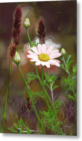 Camomile And Grass Metal Print by Joe Halinar