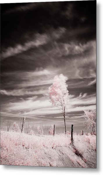 Candy Cotton Dream Metal Print by Lea Seguin