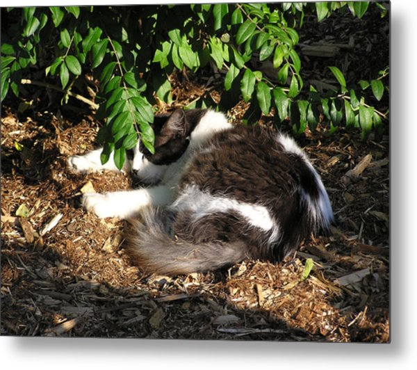 Cat Resting Under Tree Metal Print by Richard Mitchell