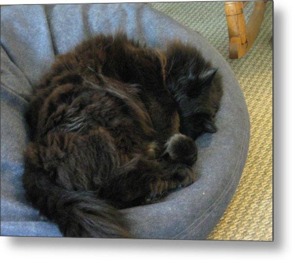 Cat Sleeping Eyes Covered Metal Print