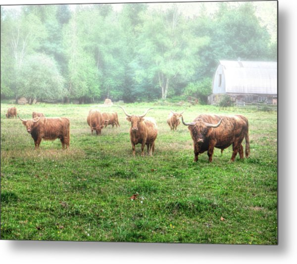 Cattle In The Mist Metal Print