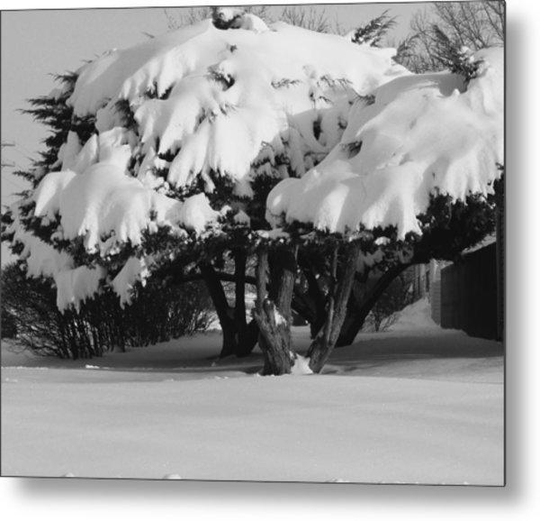 Chance Of Snow Metal Print by Nicholas J Mast