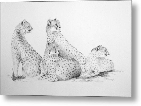 Cheetah Group Metal Print