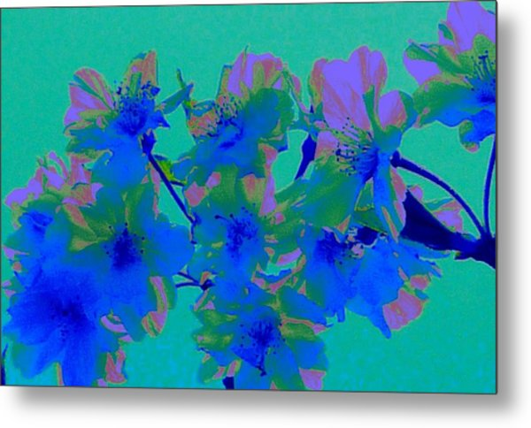 Cherry Blossom Series 2 Metal Print by Jen White