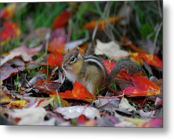 Chip The Munk Metal Print