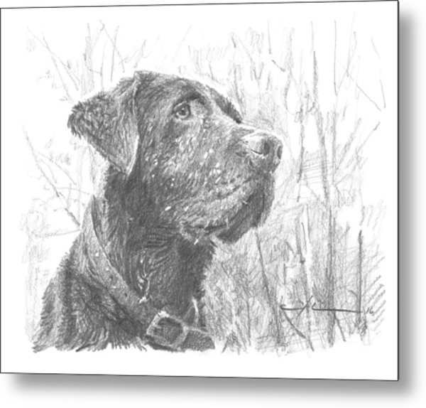 Chocolate Labrador In Woods Drawing Metal Print by Mike Theuer