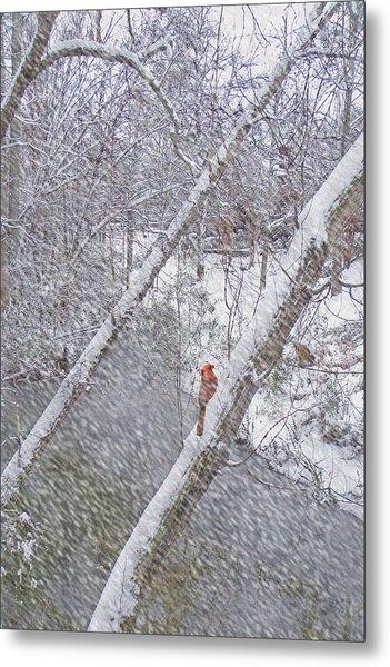 Christmas Card - Cardinal In Tree Metal Print