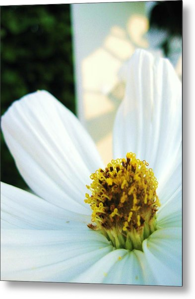 Close To A Daisy Metal Print by Nancy Ippolito