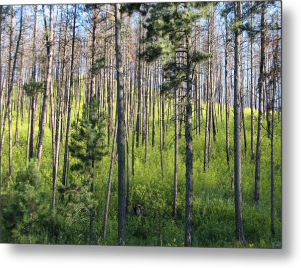Clover In Pines Metal Print by Marion Muhm