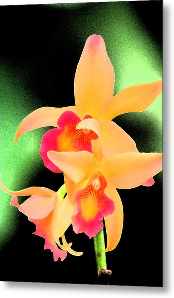Colorful Orchid Metal Print by Nanette Hert