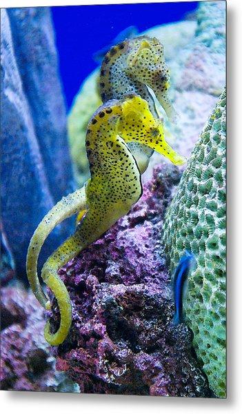 Colorful Seahorses Metal Print