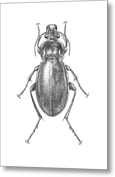Colosma Beetle Metal Print