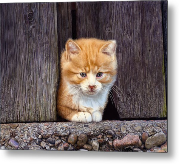 Comin' Out To Play Metal Print by Bob Nolin