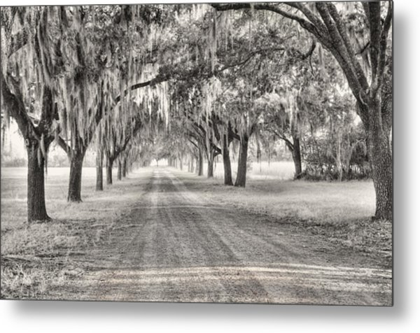 Coosaw Plantation Avenue Of Oaks Metal Print