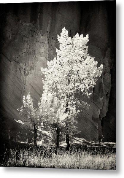 Cottonwood And Canyon Wall Metal Print