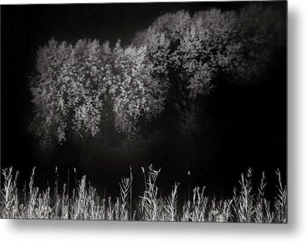 Cottonwoods And Grasses Metal Print