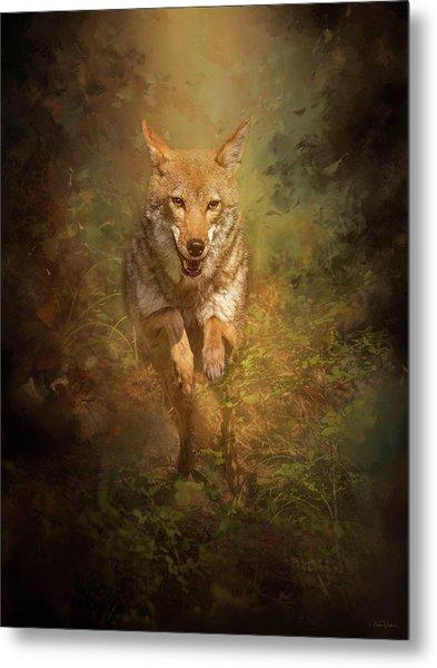 Coyote Energy Metal Print