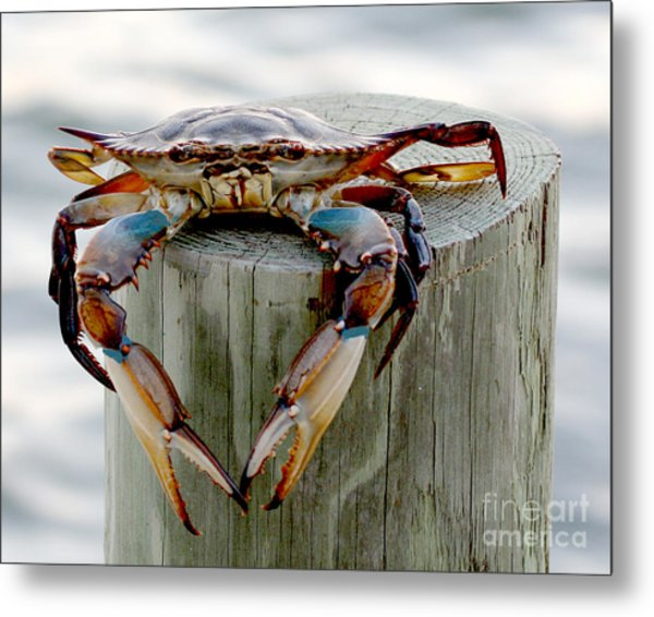 Crab Hanging Out Metal Print