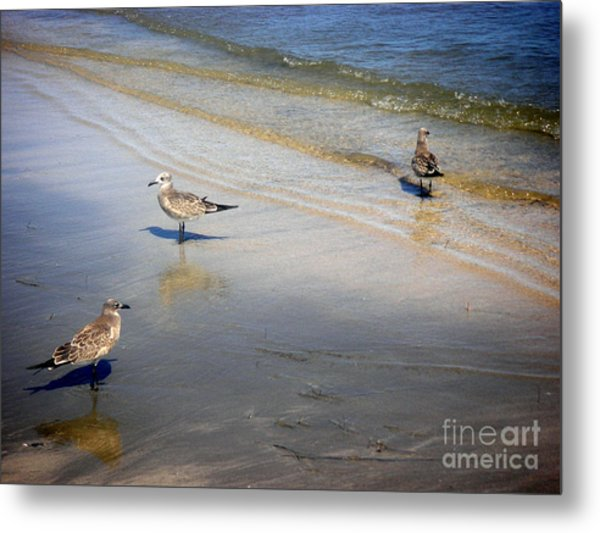 Creatures Of The Gulf - Which Way Metal Print by Lucyna A M Green