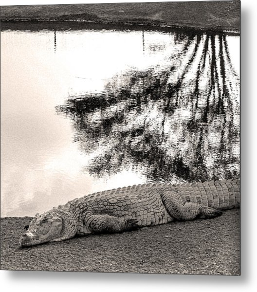 Crocodile Resting Time Metal Print