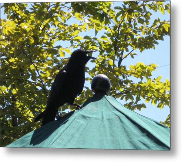 Crow On An Umbrella With Food Metal Print