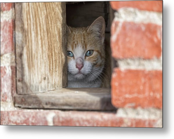 Cubby Cat Metal Print