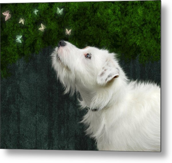 Cute White Jack Russel Dog Metal Print