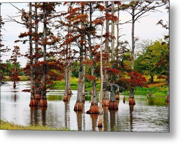 Cypress In Autumn Metal Print