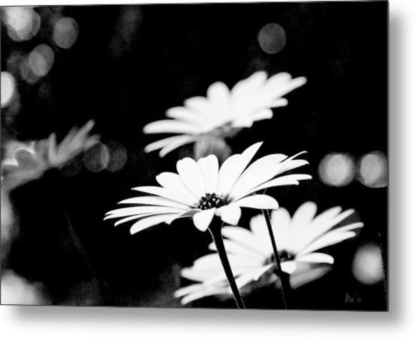 Daisies In Black And White Metal Print