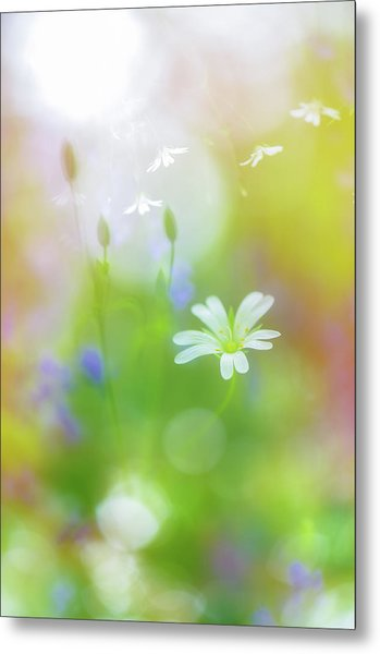 Dance Of The Nature Spirits Metal Print