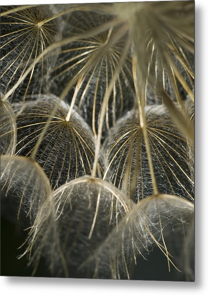 Dandelion Bouquet Metal Print by Iris Greenwell